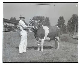 Unidentified man with bull at Pacific International Livestock Exposition