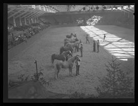 Pacific International Livestock Exposition show, Portland