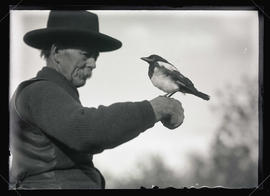 Peck Holding a Magpie