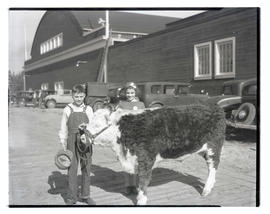 Boy and girl with steer or heifer