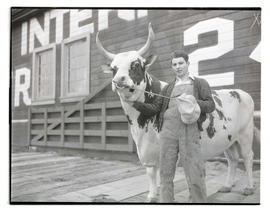 Young man with bull