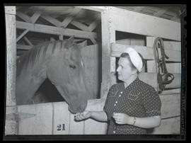 Horse eating from woman's hand