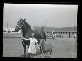Girl with horse and foal