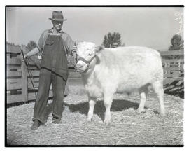 Man with champion Shorthorn steer