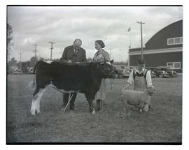 People with steer and sheep