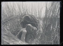 Bohlman Hiding in the Reeds
