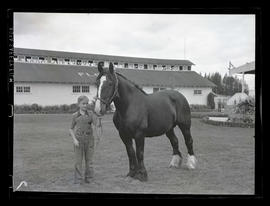 Boy and draft horse