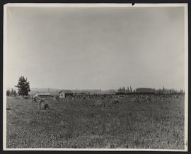 Train Passing Through Fields near Wilsonville, Oregon