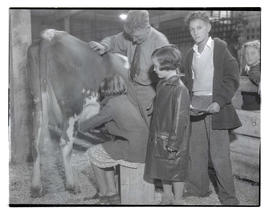 Man and children in stall with cow