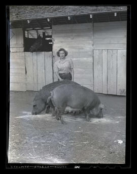 Woman and two pigs outside stable