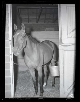 Horse standing in stall