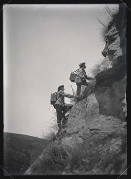 H. T. Bohlman and W. L. Finley Climbing to a Buzzard's Nest