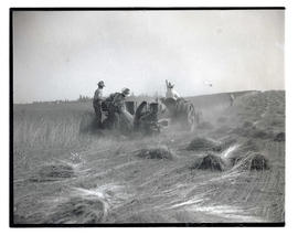 Men harvesting flax?