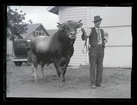 Man with bull