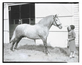 Woman with horse holding pose
