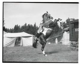 Circus performer on rearing horse
