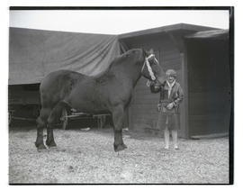 Wilma Hofstra with draft horse
