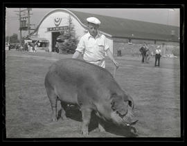 Young man with pig