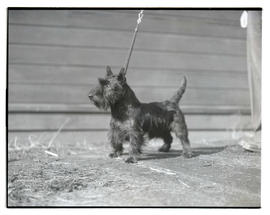 Dog, possibly at livestock show