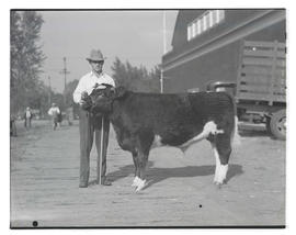 Unidentified man with steer, probably at Pacific International Livestock Exposition