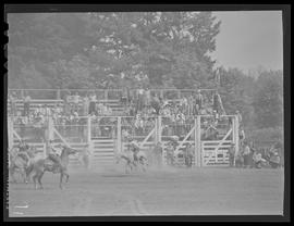 Bronc rider at Molalla Buckeroo