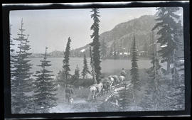 Pack train along Reflection Lake