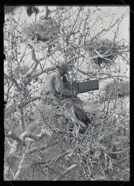 W. L. Finley Photographing Heron