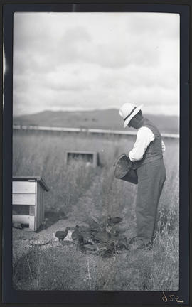 Gene Simpson feeding pheasants