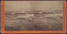 """Sea Lions, West End, Farallone Islands, Pacific Ocean"" (Stereograph 2049)"