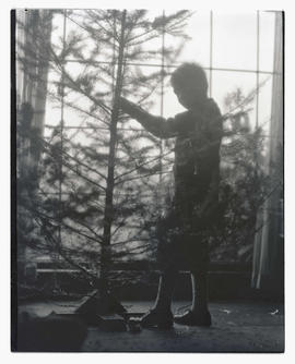 Unidentified boy and tree silhouetted in front of window