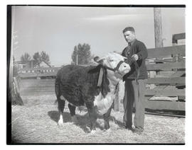 Man with champion steer