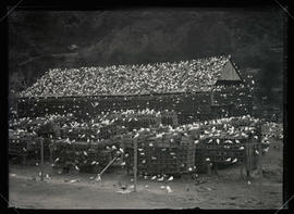 Pigeon Ranch