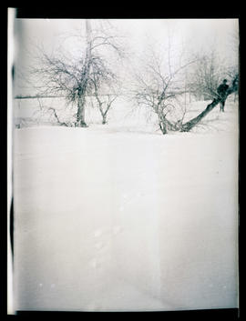 Barren trees in the snow