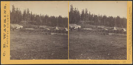 """Residence of Mrs. Knight, Columbia River, opposite Government Island."" (Stereograph 1227)"