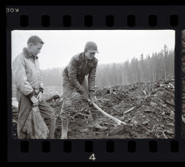 Young men planting trees at Timothy Lake