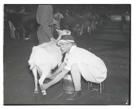 Unidentified person in costume milking goat, probably at Pacific International Livestock Exposition