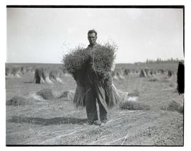 Man holding sheaves of flax?