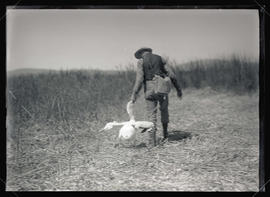 H. T. Bohlman Walking With a Pelican