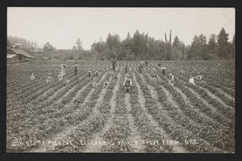 Farm Laborers in Strawberry Field near Clackamas, Oregon