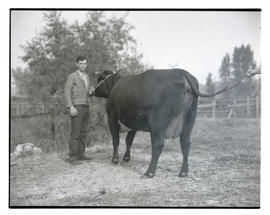 Man with cow