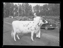 Unidentified young man with cow, probably at Pacific International Livestock Exposition