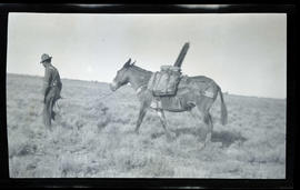Man leading a packhorse