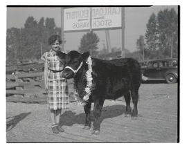 Unidentified girl with steer or heifer, probably at Pacific International Livestock Exposition