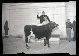 Steer at auction?