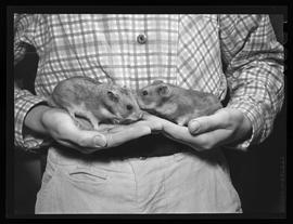 Raymond Lucas with Hamsters