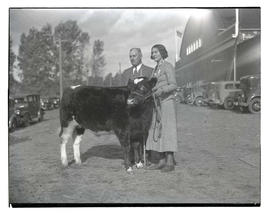 Man and woman with steer