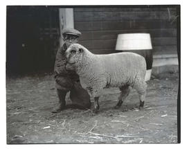 Ray Harwood with sheep