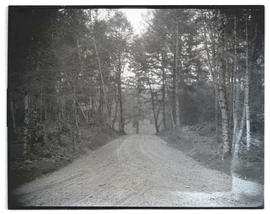 Gravel road in forested area