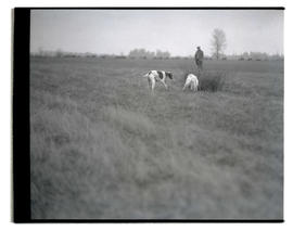 Hunting dogs in field