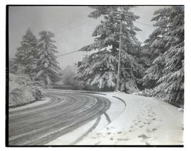 Snow-covered street and trees